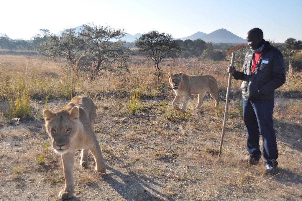 digitopreneurs lion walk